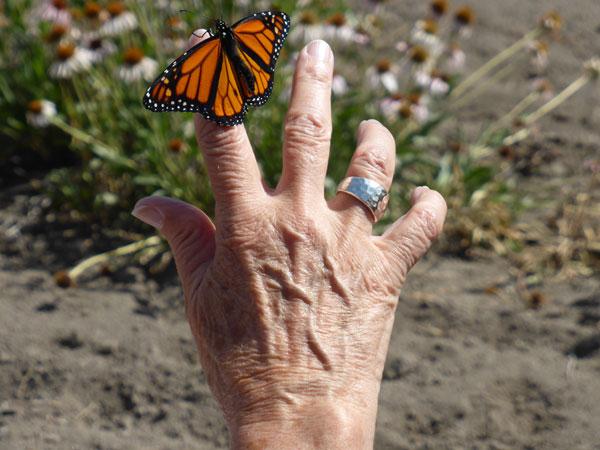 Memorial Butterfly Release_2