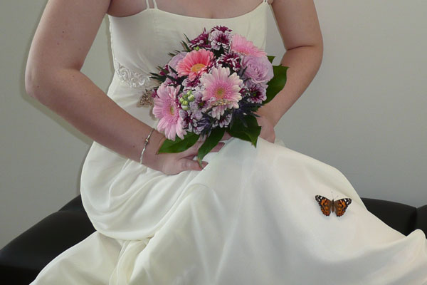 Butterfly Release For Wedding